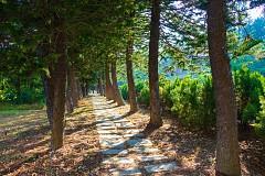 佳作_曾暐翔 樹林步道